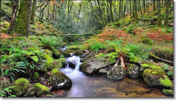 英国Dartmoor National Park