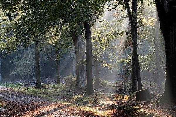 英国New ForestNational Park