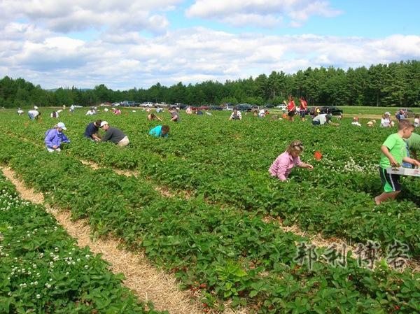 英国草莓庄园