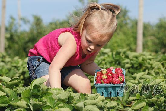 英国摘草莓庄园