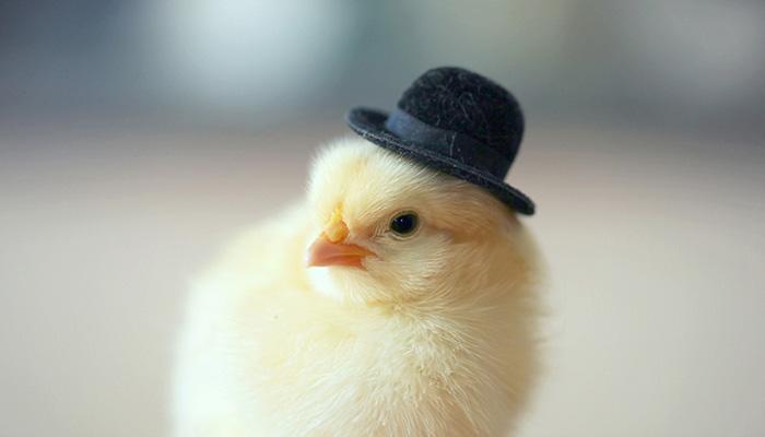 腐国的帽子文化