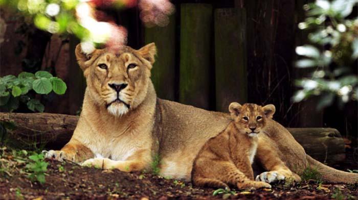 伦敦动物园(London Zoo)