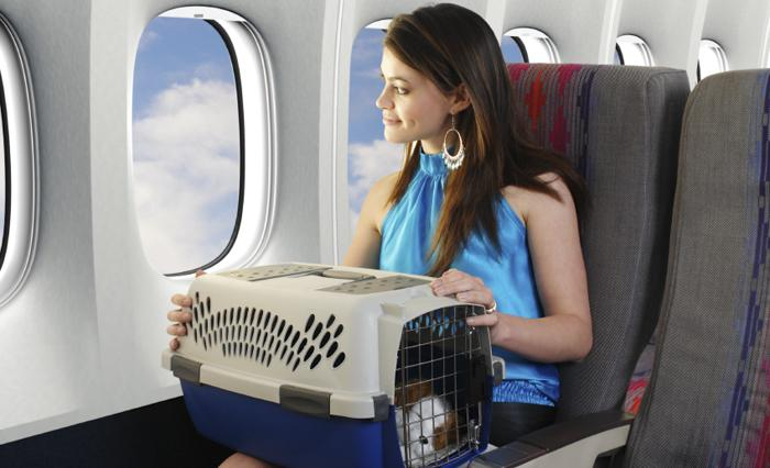 如何将宠物带回国?