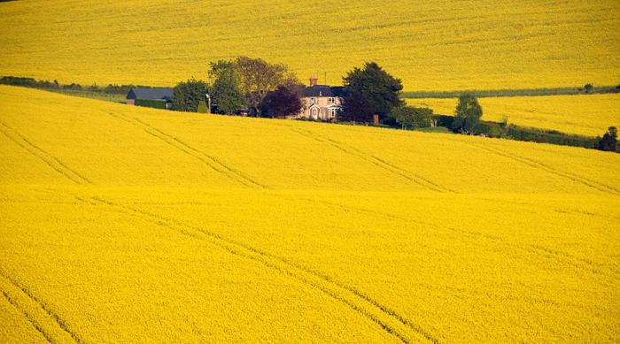 A COTTAGE WITH A VIEW..... SURROUNDED BY A MASSIVE RAPESEED FIELD...THE OWNERS OF THIS PROPERTY NEAR HAMBLEDON IN HAMPSHIRE CERTAINLY HAVE LOUNGE WITH A VIEW . PICTURE MURRAY SANDERS