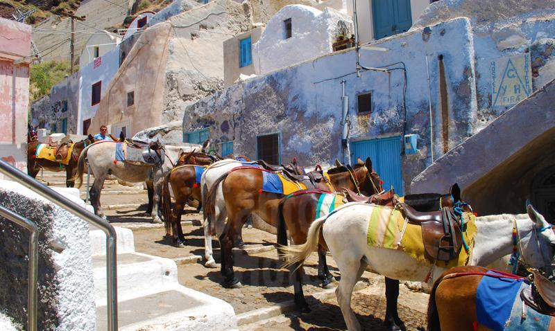 在Fira还能尝试一次骑驴的体验