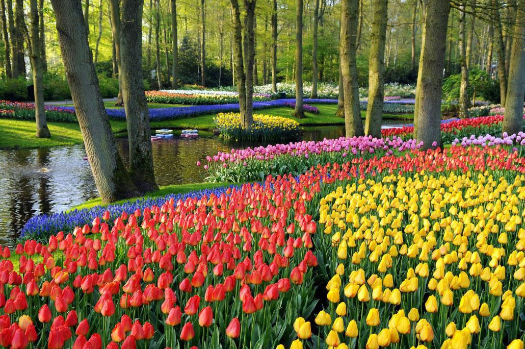 荷兰库肯霍夫公园