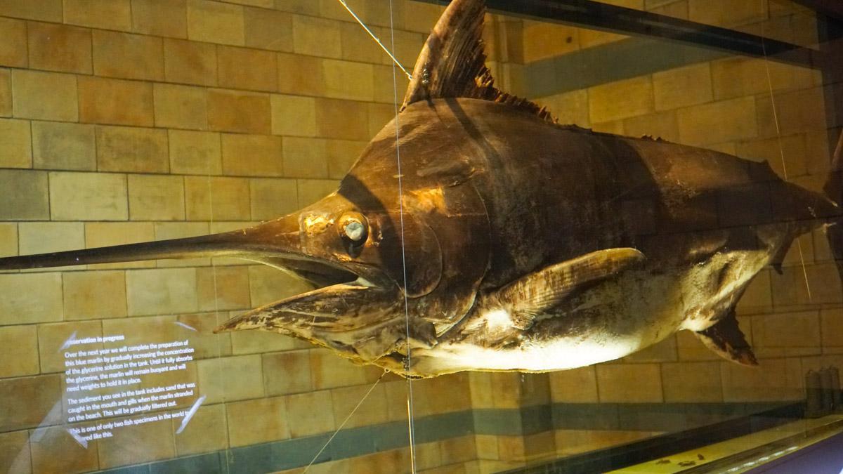 海洋生物展示区
