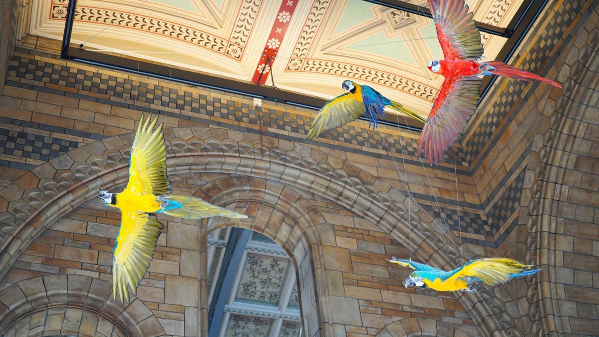 馆内的鸟类展示区