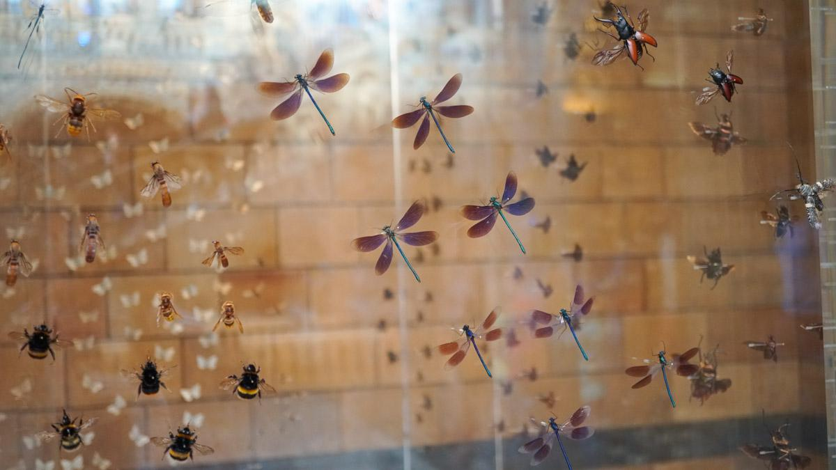 昆虫展示区