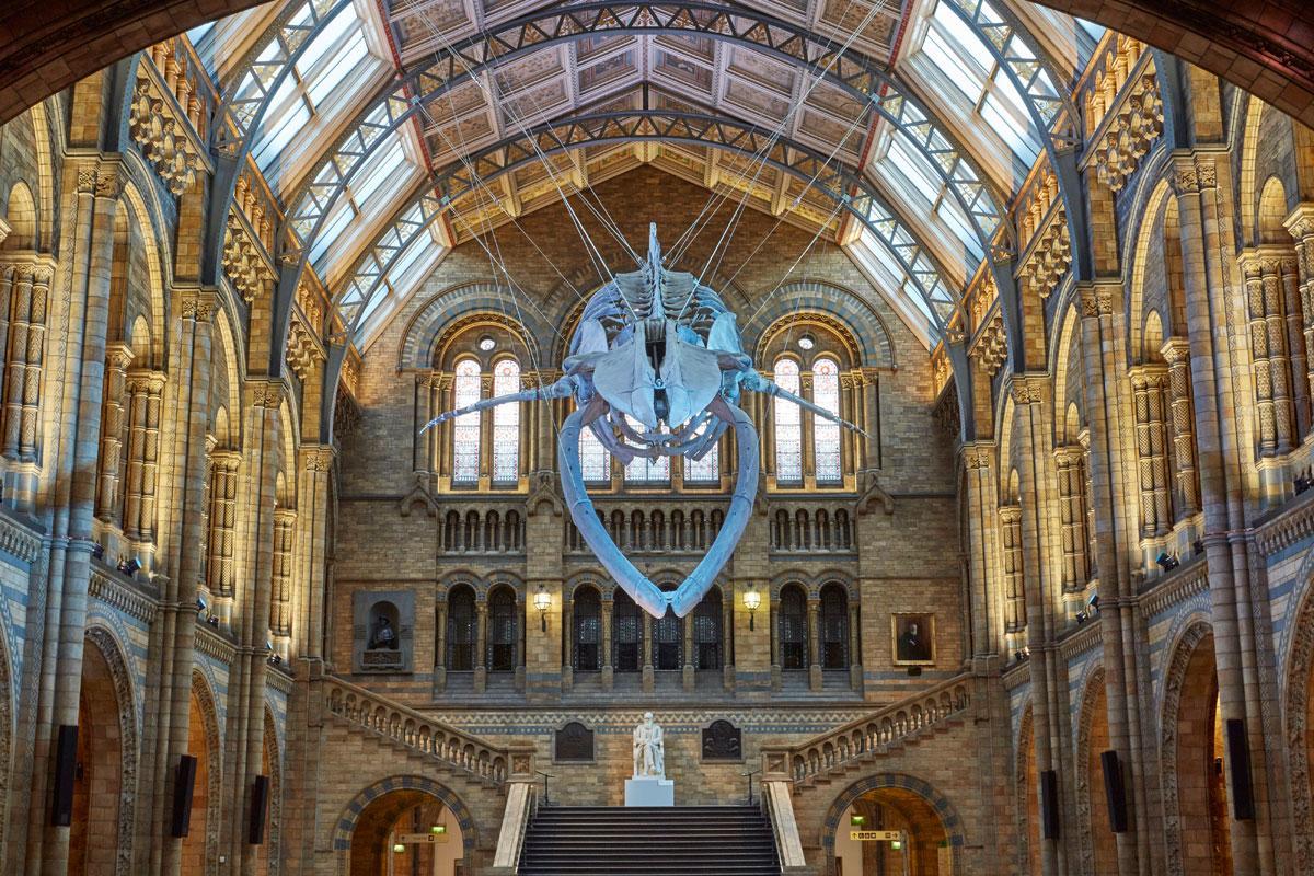 现在展示的蓝鲸骨架