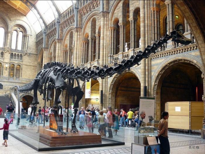 2015年前展示的恐龙迪皮骨架
